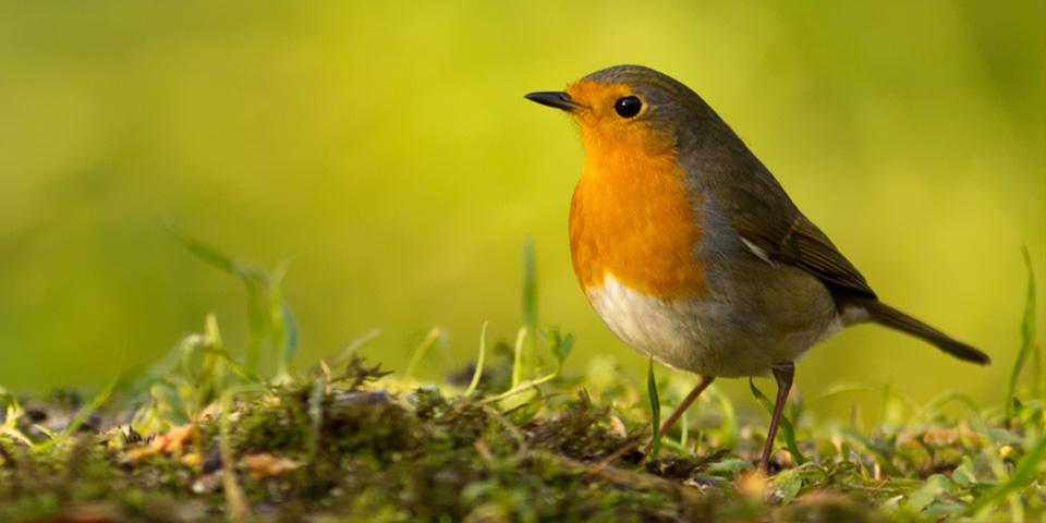 Verwen uw tuinvogels met ons uitgebreide assortiment strooivoer en andere voederartikelen